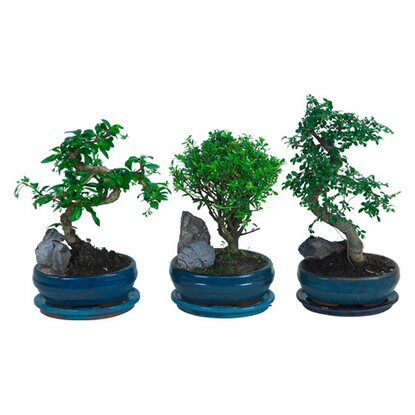 Bonsai mix kődekorral