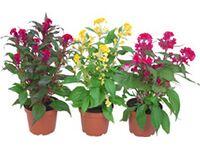 scheurich 309 orchideakasp tm r je 14 cm orchid twirl v s rolni obi. Black Bedroom Furniture Sets. Home Design Ideas